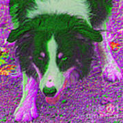 Border Collie Stare In Colors Art Print by Smilin Eyes  Treasures