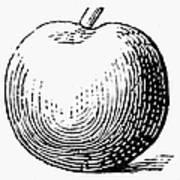 Botany: Apple Art Print