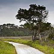 Botany Bay Pathway Tree Art Print