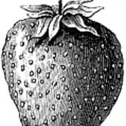 Botany: Strawberry Art Print