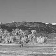 Boulder County Colorado Front Range Panorama With Horses Bw Art Print