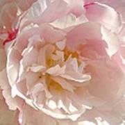 Bowl Of Petals Art Print