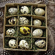 Box Of Quail Eggs Art Print