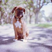 Boxer Puppy Art Print by Diyosa Carter