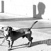 Boy Meets Dog Print by Joe Jake Pratt