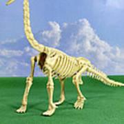Brachiosaurus Dinosaur Skeleton Art Print