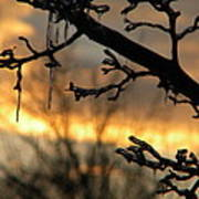 Branches in January Art Print