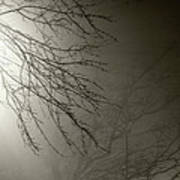 Branches In The Fog Art Print