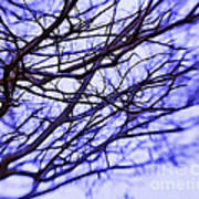 Branches In Winter Art Print by Judi Bagwell