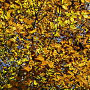 Branches Of Gold Art Print