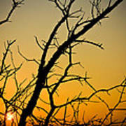 Branches Reaching The Sunset Art Print