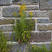 Brick Wall Flowers Art Print
