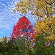 Bright Autumn Color Art Print
