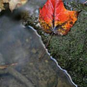 Bright Red Leaf Near A Stream Art Print by Chris Hill