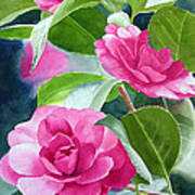 Bright Rose-colored Camellias Art Print by Sharon Freeman