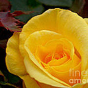 Bright Yellow Rose Art Print