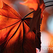 Brilliant Bronze Maple Leaf Art Print by Chris Hill