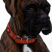 Brindle Boxer Art Print by Michelle Harrington
