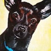 Brindle Chihuahua Ears Art Print
