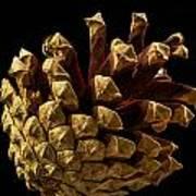 Close Up Of Pinecone Art Print