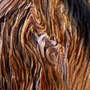 Bristlecone Pine Grain Art Print
