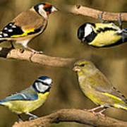 British Garden Birds Art Print