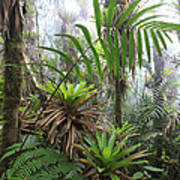 Bromeliads And Tree Ferns  Art Print by Cyril Ruoso