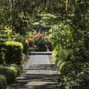 Brookgreen Gardens Path Art Print