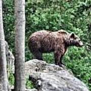 Brown Bear 208 Art Print