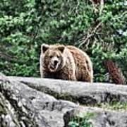 Brown Bear 209 Art Print