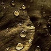 Brown Drops Of Rain Art Print