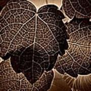 Brown Ivy Art Print