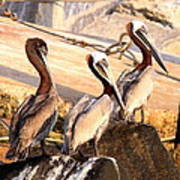 Brown Pelican - Holding Things Together Art Print