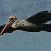 Brown Pelican Painterly Art Print
