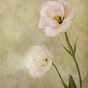 Brushed Pink Lisianthus Art Print