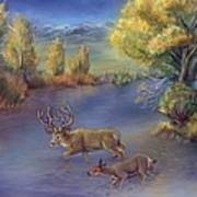 Buck And Doe Crossing River Art Print