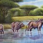 Buffalooes Watering Art Print