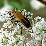 Bug And Flowers Art Print
