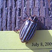 Bug Lands On My Paper Art Print