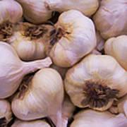 Bulk Garlic Watercolor Art Print