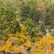 Bull Elk Lake Crusing With Autumn Colors Art Print