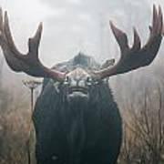 Bull Moose Testing Air For Pheromones Art Print