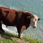 Bull On The Edge Art Print