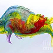 Bullfish Art Print