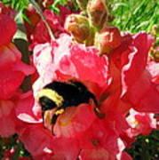 Bumblebee And Snapdragon Art Print