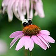 Bumblebee Bliss Art Print