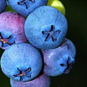 Bunch Of Blueberries Art Print