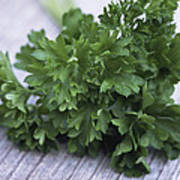 Bunch Of Parsley Art Print