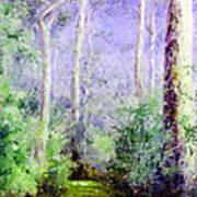Bush Trail At The Afternoon Art Print