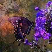 Busy Spicebush Butterfly Art Print by J Larry Walker